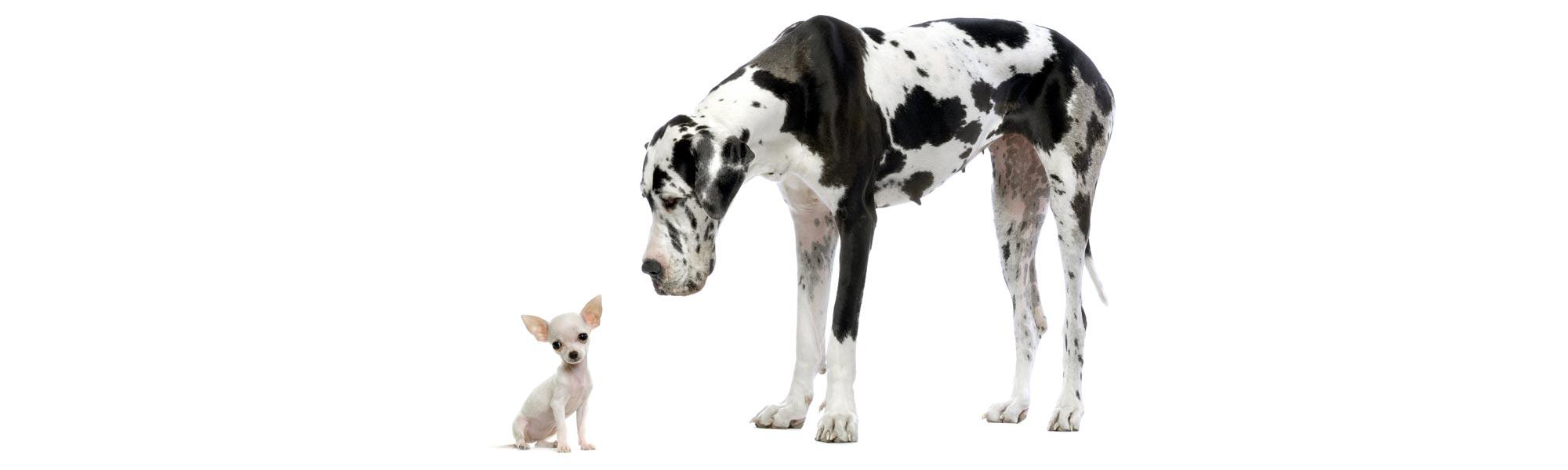 adigone-visuel-chien